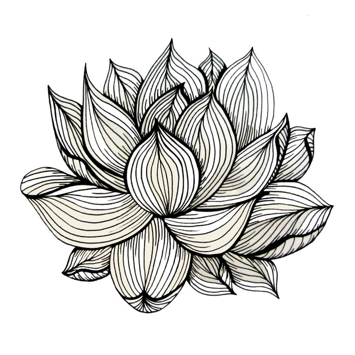 700x700 Huge Collection Of 'lotus Flower Black And White Drawing