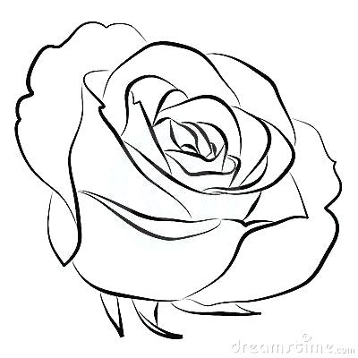 400x400 Simple Roses Drawings Lets Learn How To Draw A Rose Head Simple