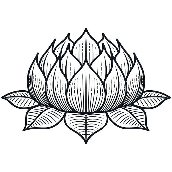 600x600 Drawing Lotus Flower Free Line Drawing Lotus Flower