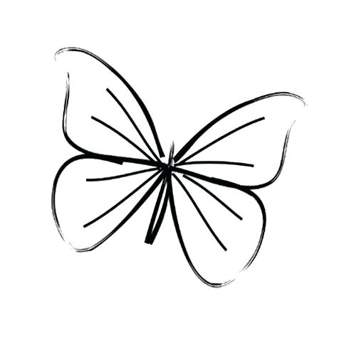 500x482 Drawings Butterflies Easy Butterfly Drawings Step