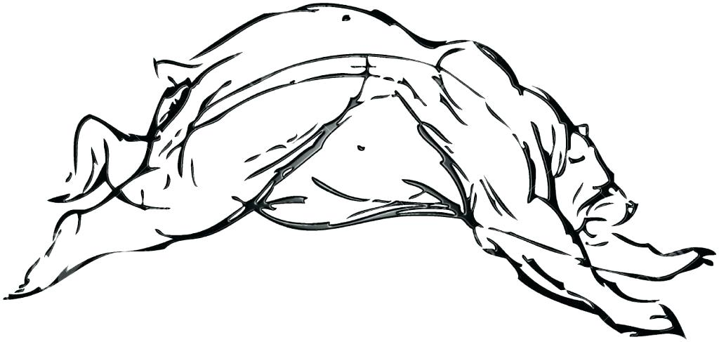 1024x487 Simple Drawing Of A Bear Image Titled Draw A Teddy Bear Step