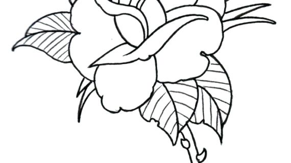 570x320 Simple Rose Drawing Vector Line Drawing With Simple Rose Black