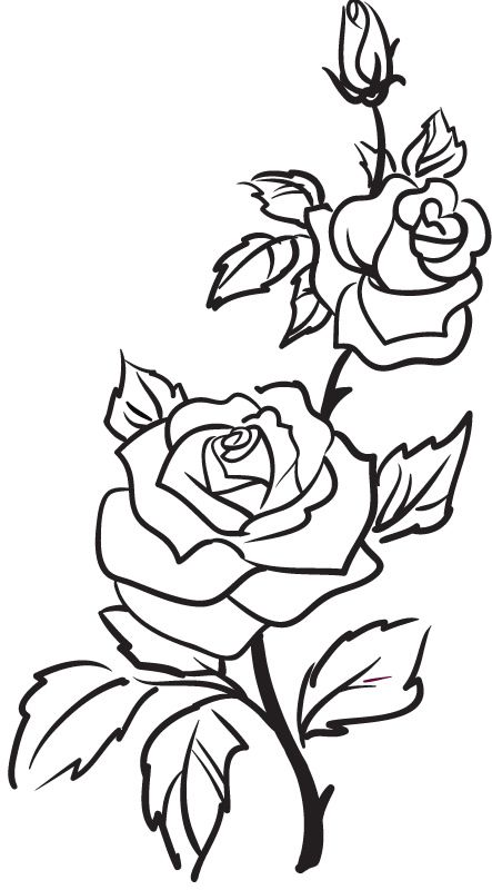 443x800 Line Drawing Of Rose Flower Two Roses Outline Rose Flowers Wall