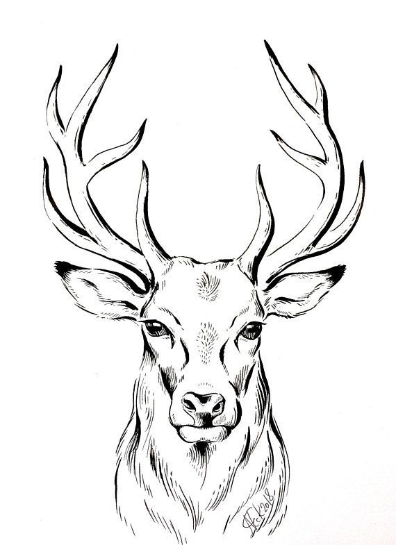 570x785 Original Deer Ink Drawing, Deer Illustration, Stag, Animal Art