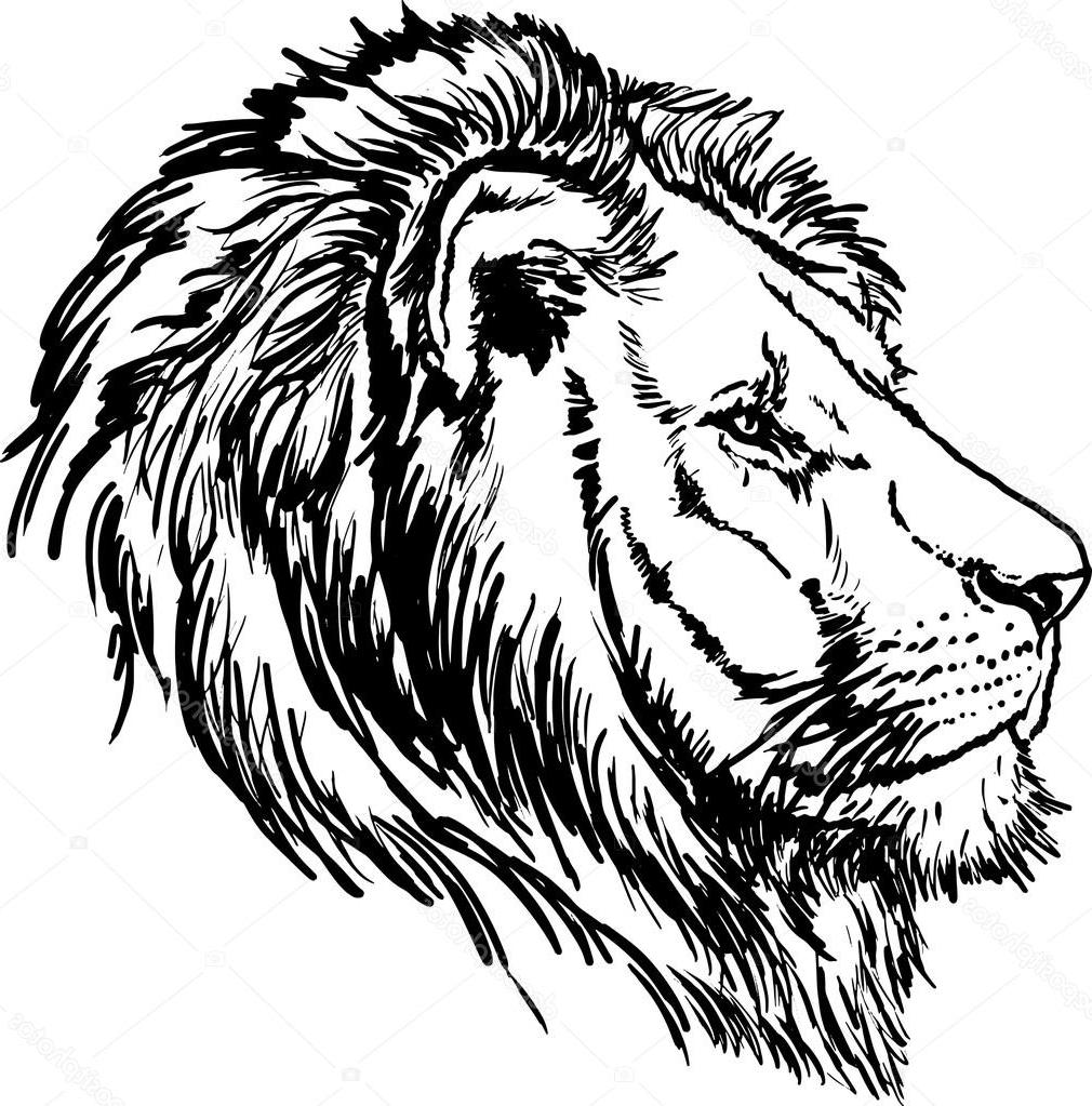 Pencil lion drawing free download best pencil lion drawing