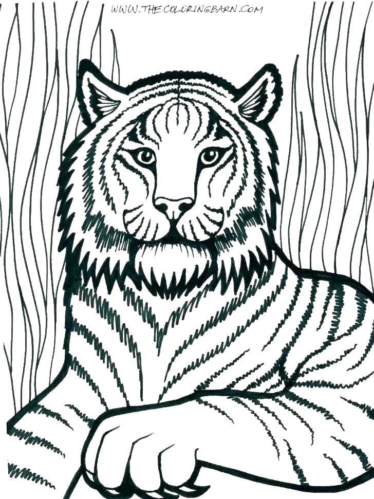 728x971 Pictures Of Lions To Color Coloring Pages Lion Mountain