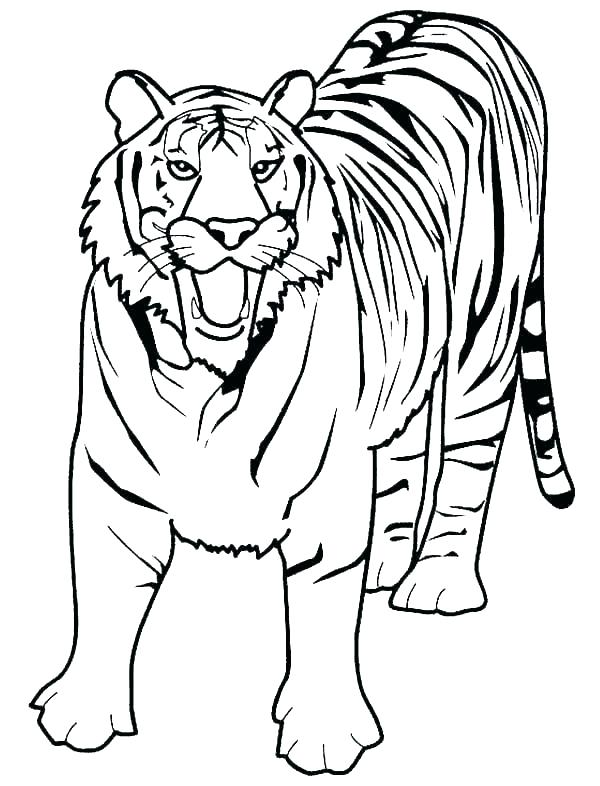 600x786 Pictures Of Tigers To Color Picture Tiger Coloring