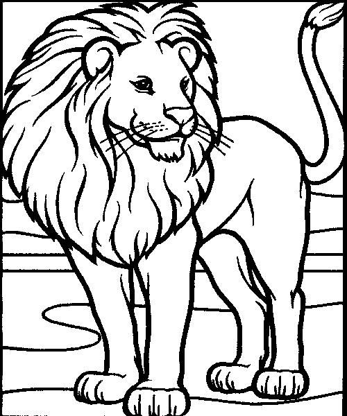500x600 This Is A Great, Friendly, Aslan Looking Lion! Kara And I Plan
