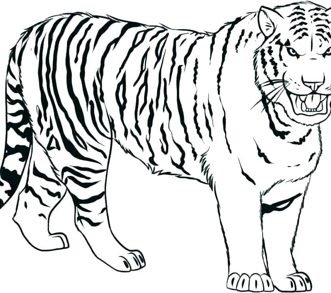 678x600 Tiger Coloring Pages Printable