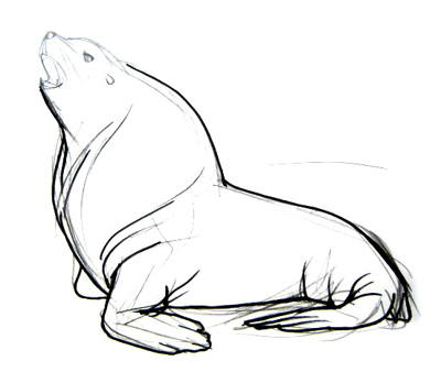 400x348 How To Draw A Sea Lion