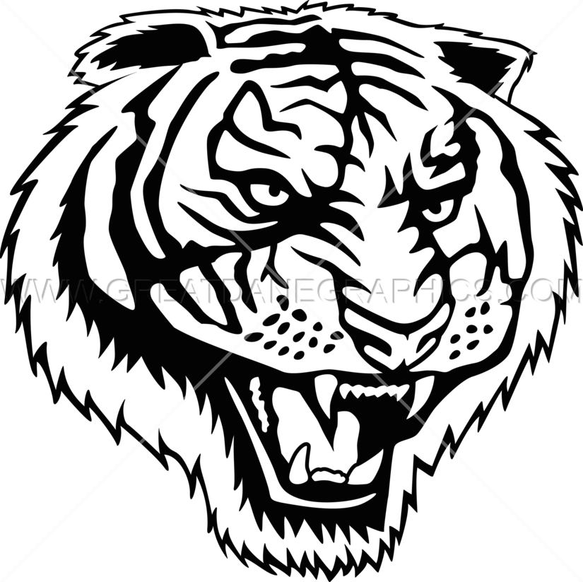 825x823 Tigers Drawing Roar Transparent Png Clipart Free Download