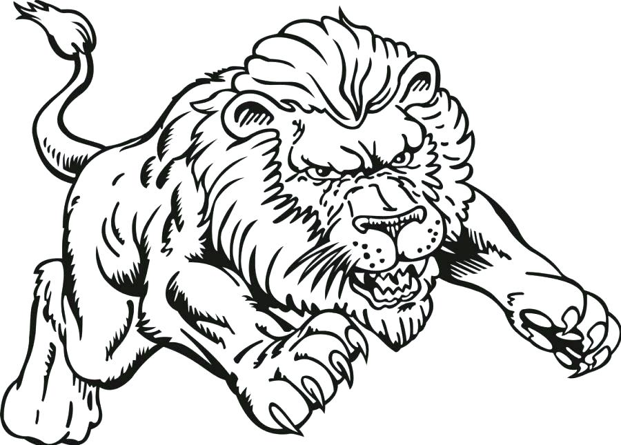 900x645 Lions Coloring Pages