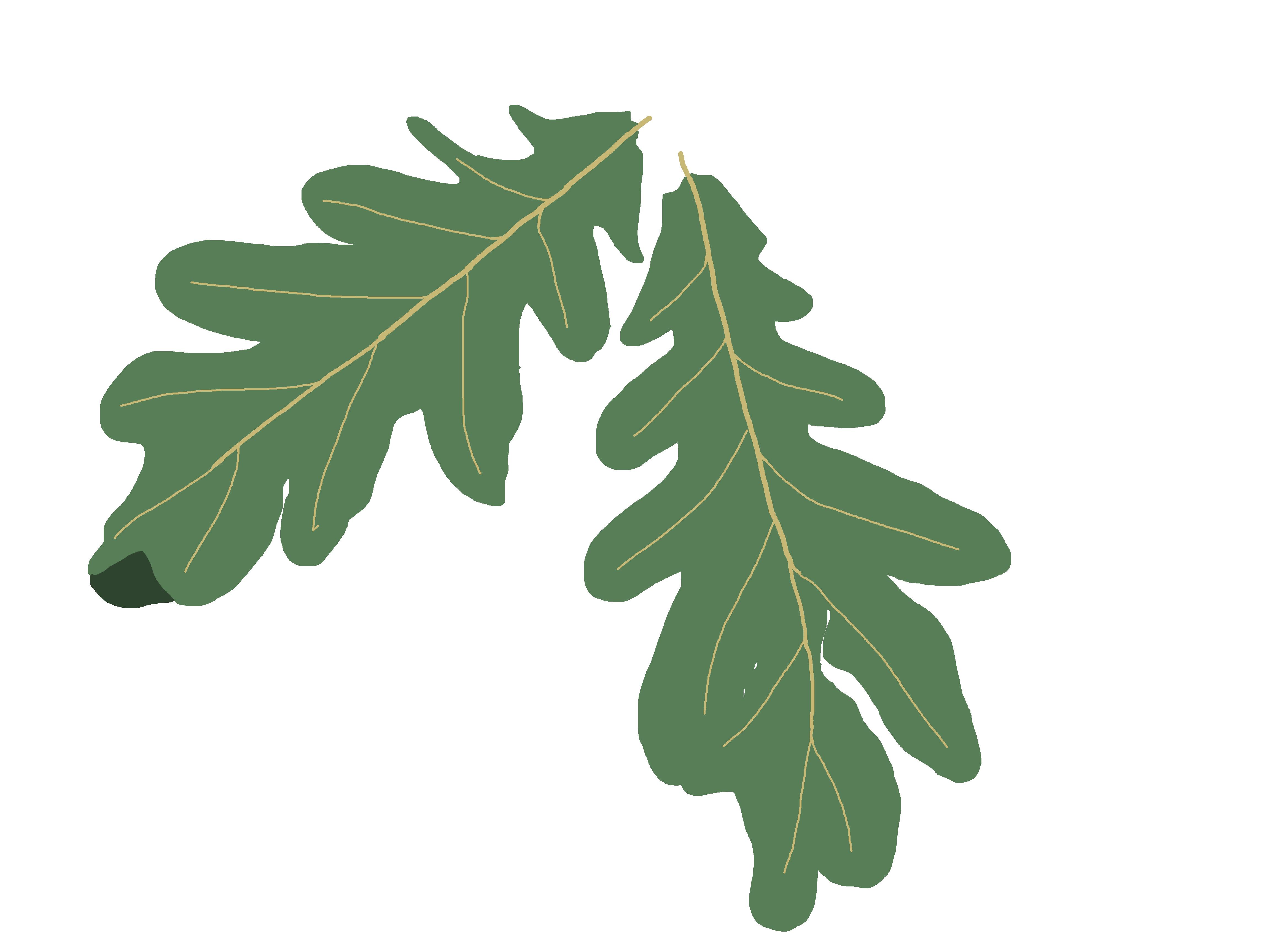 4608x3456 free png oak tree free oak tree transparent images