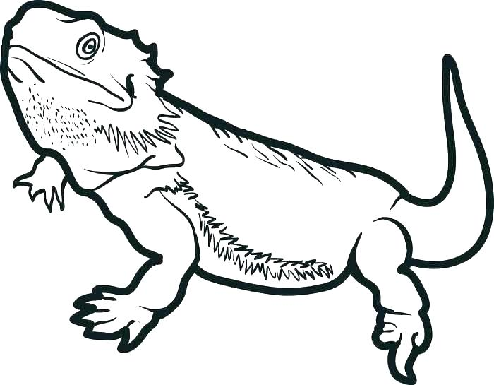 700x545 reptiles coloring pages reptiles and amphibians coloring sheets