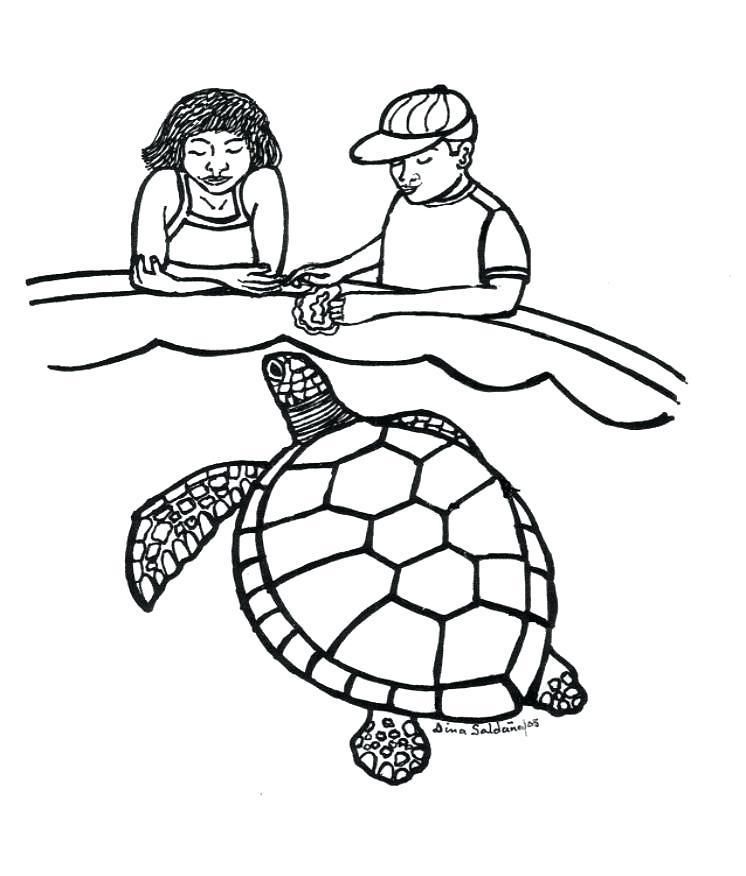 746x876 sketches of sea turtles sea turtle sea turtle sketch images nip