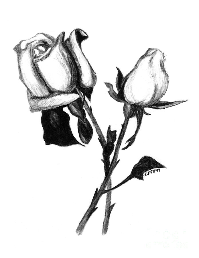 695x900 Lonely Drawing Rose For Free Download