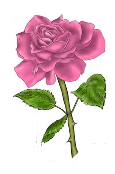 Long Stem Rose Drawing