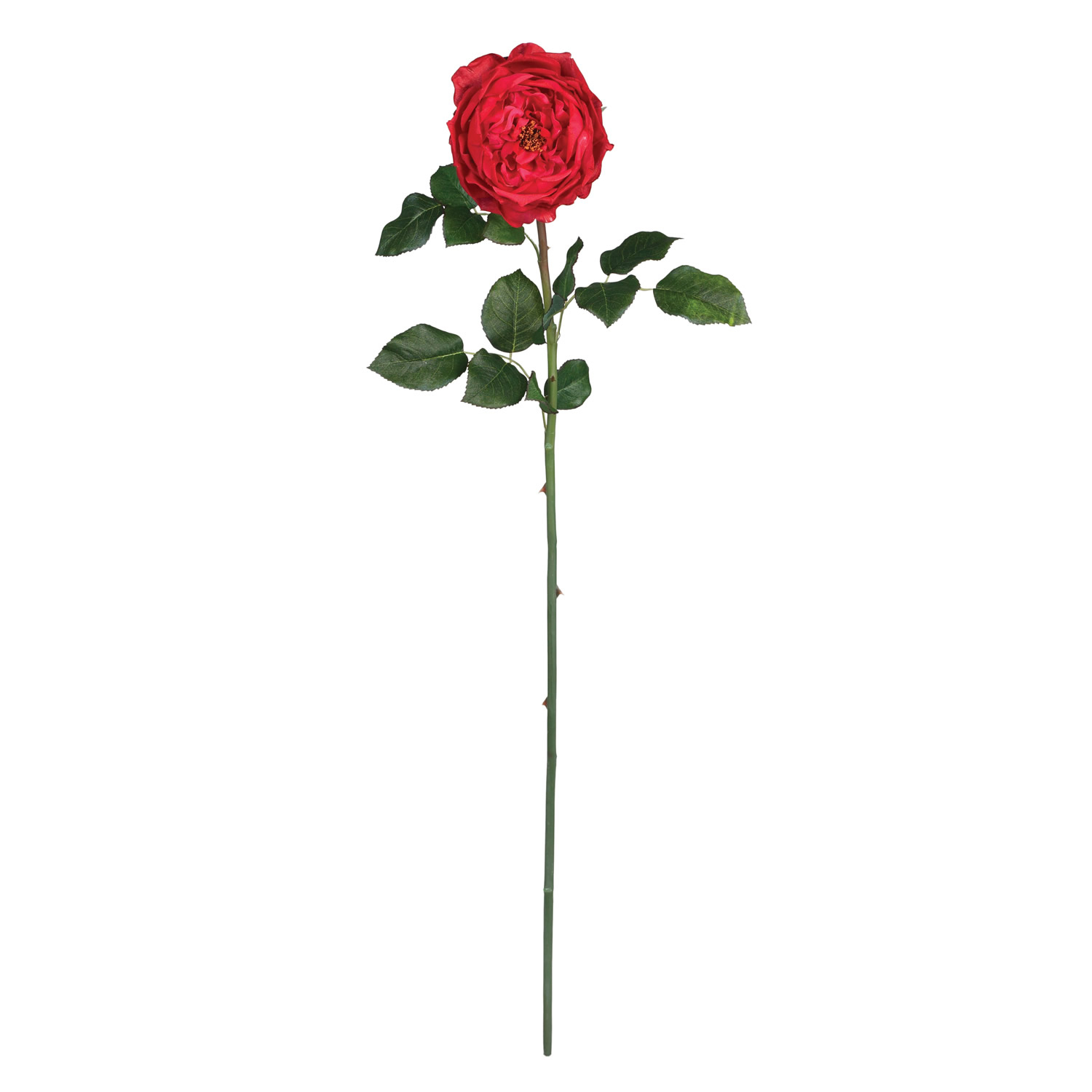 1500x1500 long stem rose drawing drawn rose long stem rose