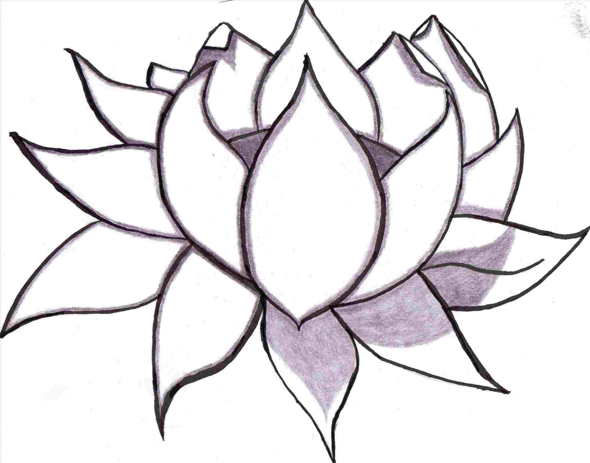 1900x1491 Lotus Blossom Lotus Flower Drawing