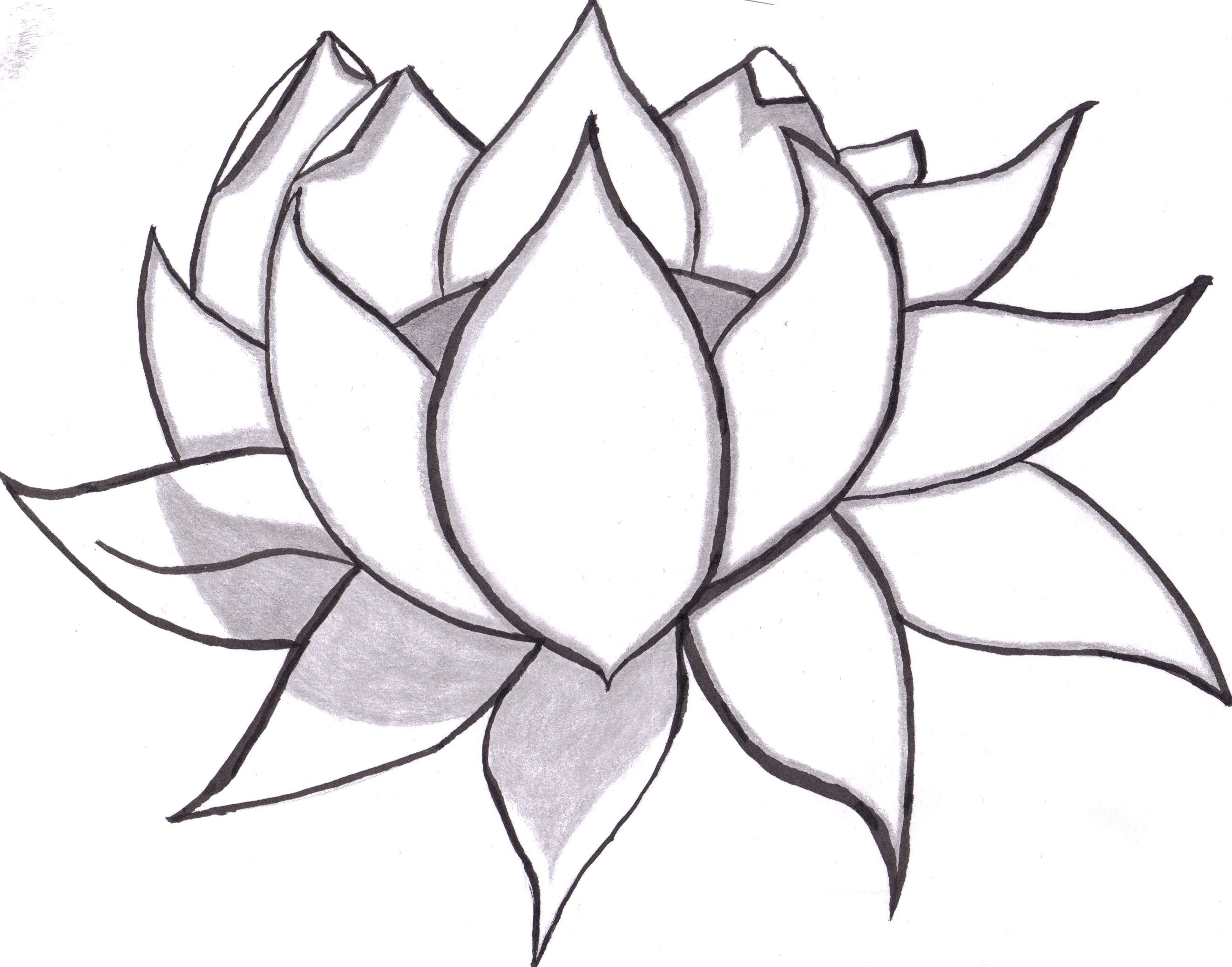 2646x2077 Lotus Flower Outline Drawing Simple Flower Drawing Ideas Lotus