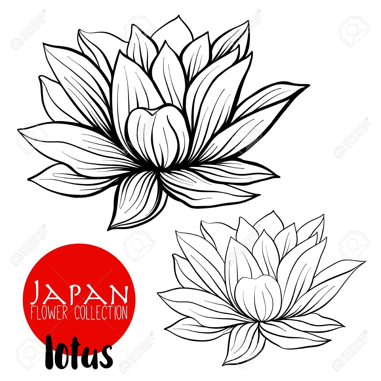 1300x1300 Sketch Beautiful Lotuses Graceful Ornament