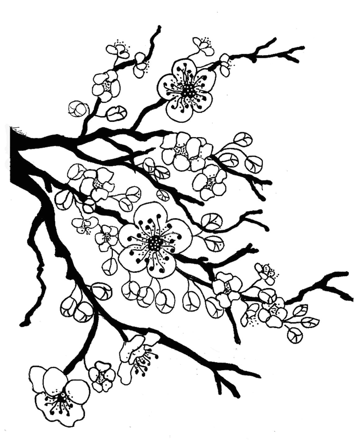1143x1430 Drawings Of Flowers On Trees Sakura Bloom Drawing Lotus Blossom