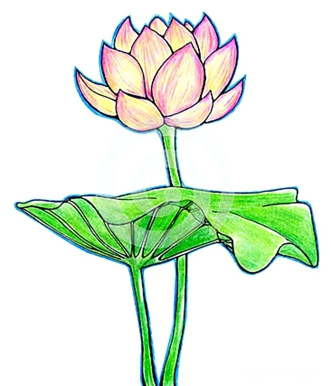 660x770 Flower Drawing And Now You End Up With A Fun Lotus Flower Drawing