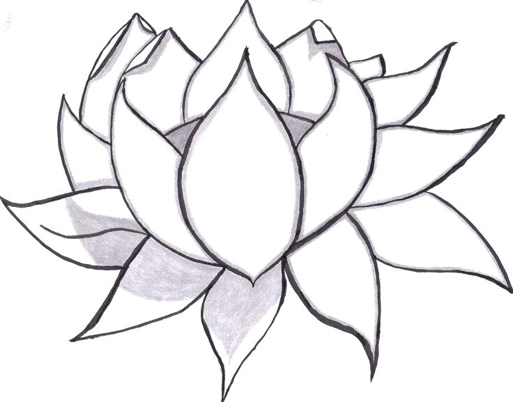 736x577 Flower Easy Drawing How To Draw A Flower Easy Step Lotus Flower