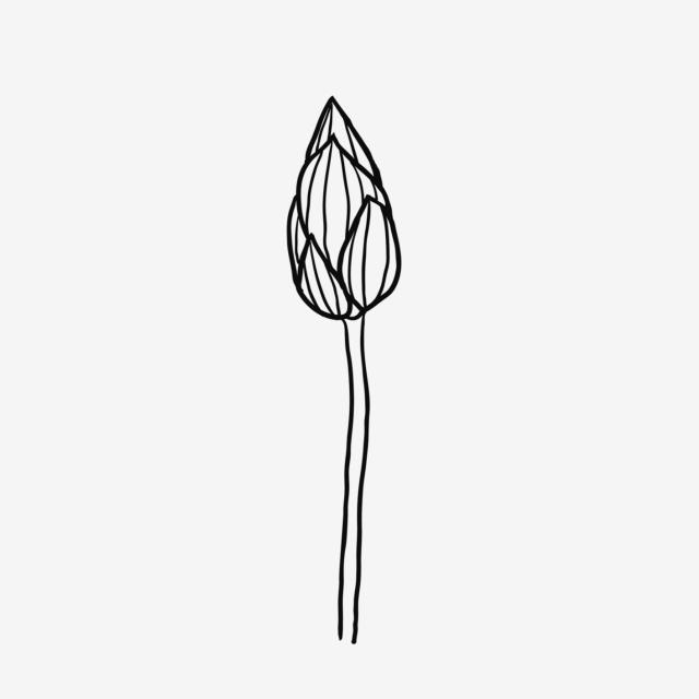 640x640 Hand Painted Lotus Flower Decoration Design Painted,black,line