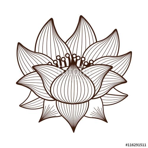500x500 Lotus Flower Line Drawing Free Download Clip Art