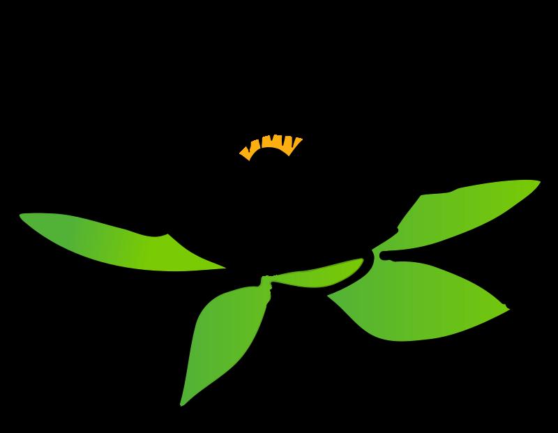 800x621 Lotus Clipart