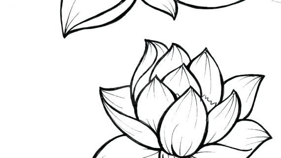 570x320 Flower To Draw Drawing Lotus Fresh Simple Lotus Flower Drawing