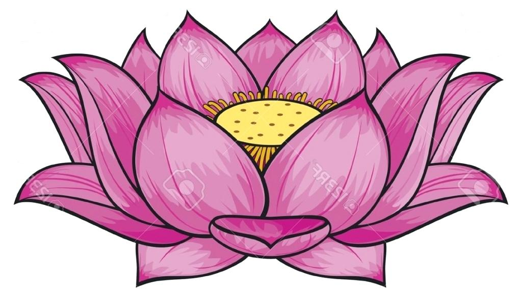 1024x584 Free Lotus Flower Line Drawing Download Free Clip Art Free Clip