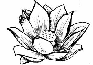 300x210 line drawing lotus flower simple lotus drawing lotus flowers