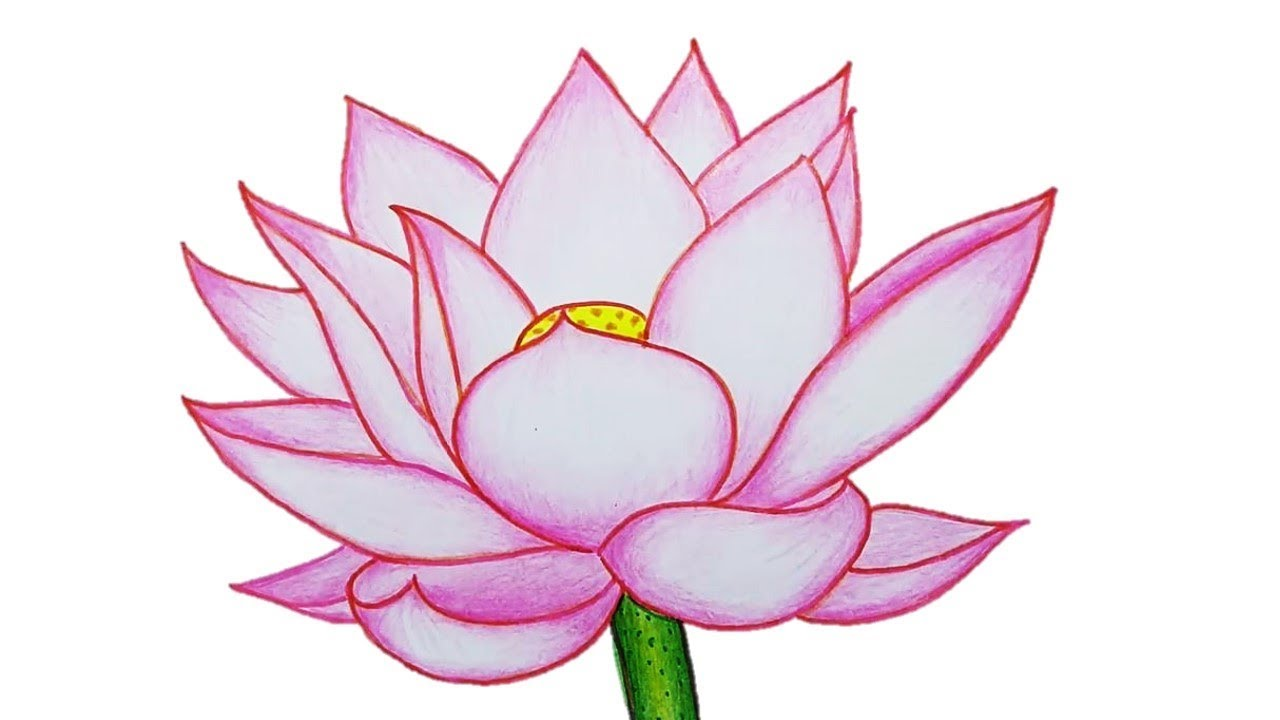 1280x720 How To Draw Lotus Flower Step