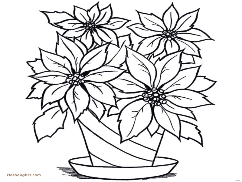 800x600 Flower Drawing For Kids How To Draw Lotus Flower Step