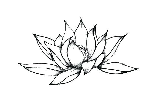 600x404 Lotus Flower Sketch Made Recently Lotus Flower Drawings Easy