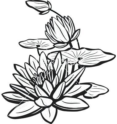 380x400 lotus sketch black and white lotus flower sketch more lotus sketch