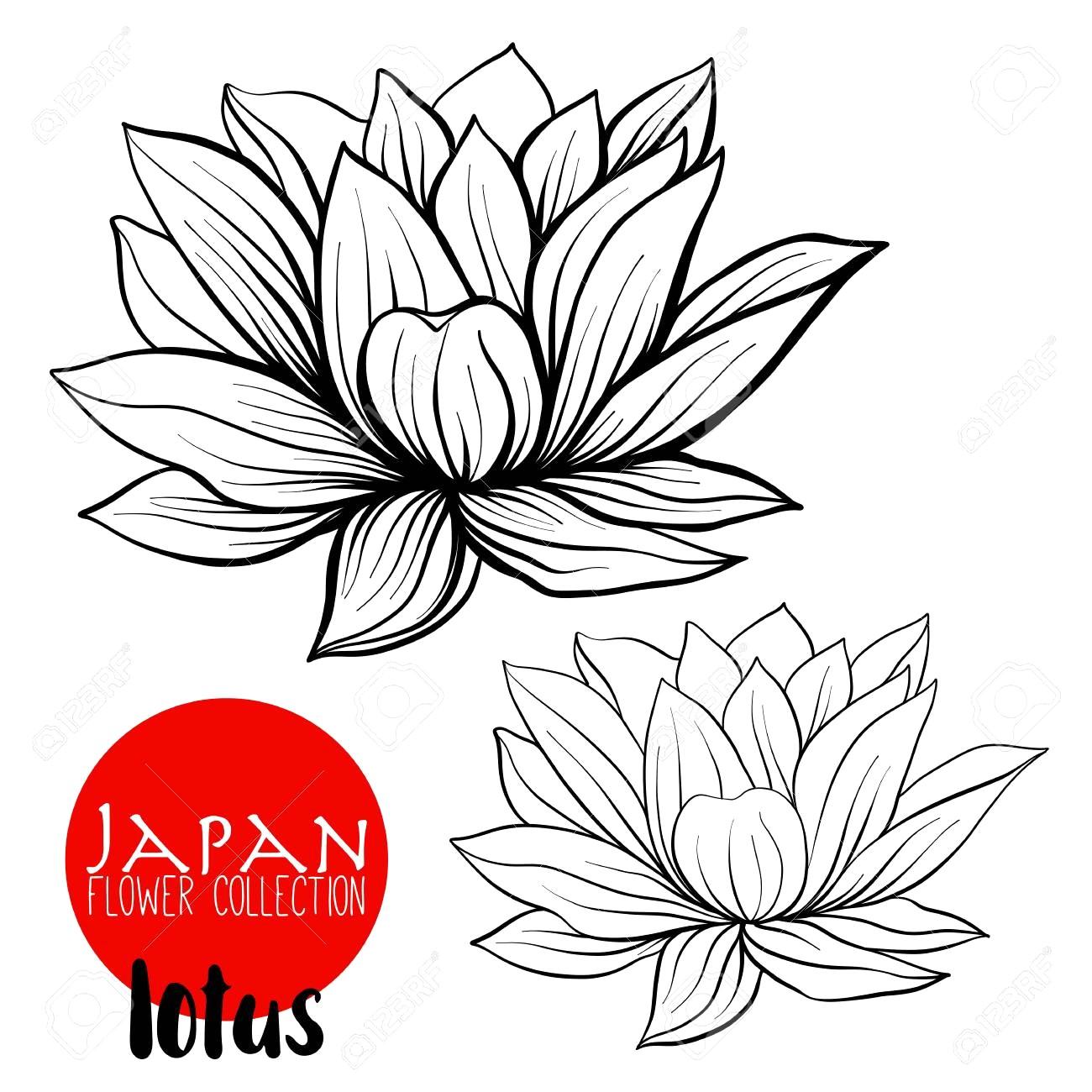 1300x1300 Lotus Flowers Stock Line Vector Illustration Botanic