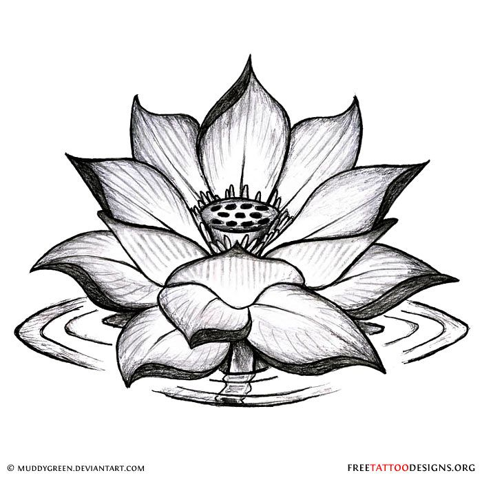 Lotus Flower Drawing Color