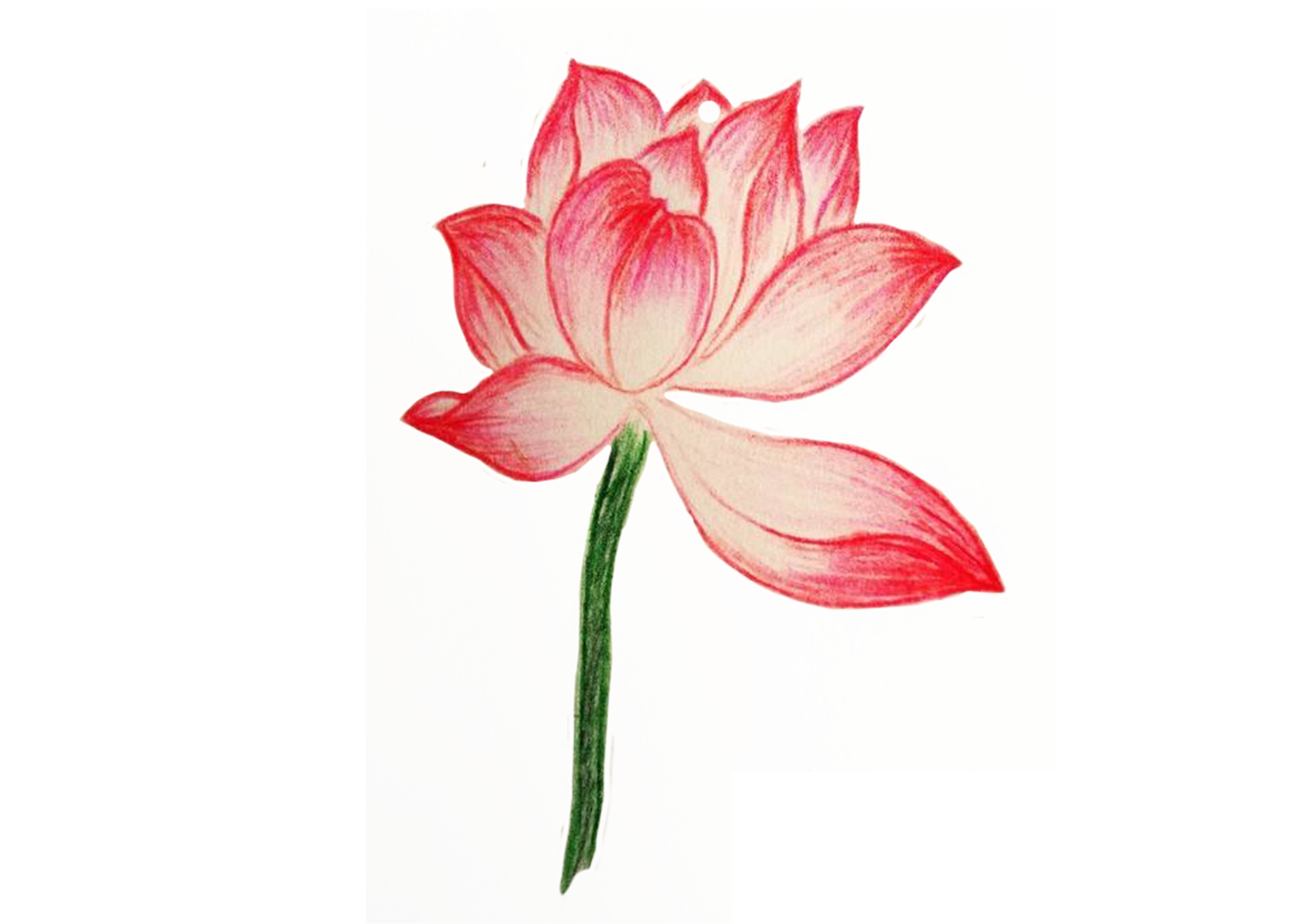 3508x2480 Collection Of Free Flower Drawing Color Pencil Download On Ui Ex