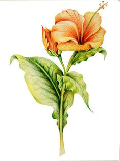 235x314 Best Colored Pencil Flowers Images In Paint, Crayons