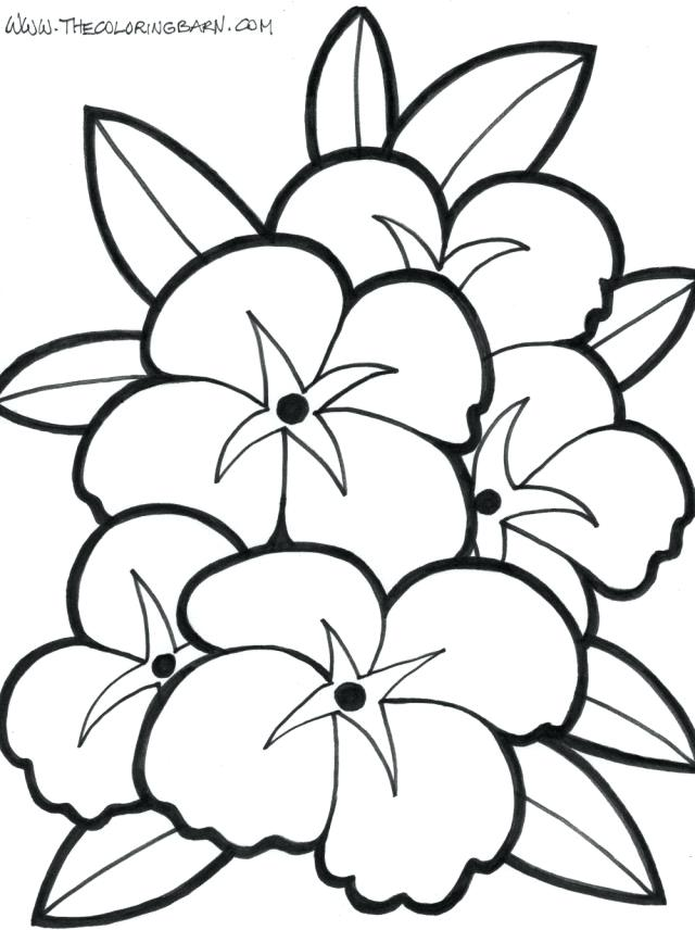 640x856 Lotus Flower Color Meaning Chart Flowers Drawing At Free