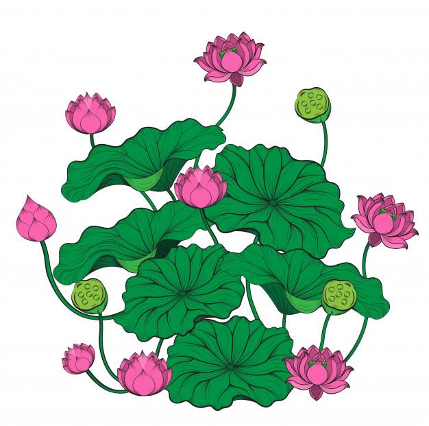 626x621 Lotus Tree Vector