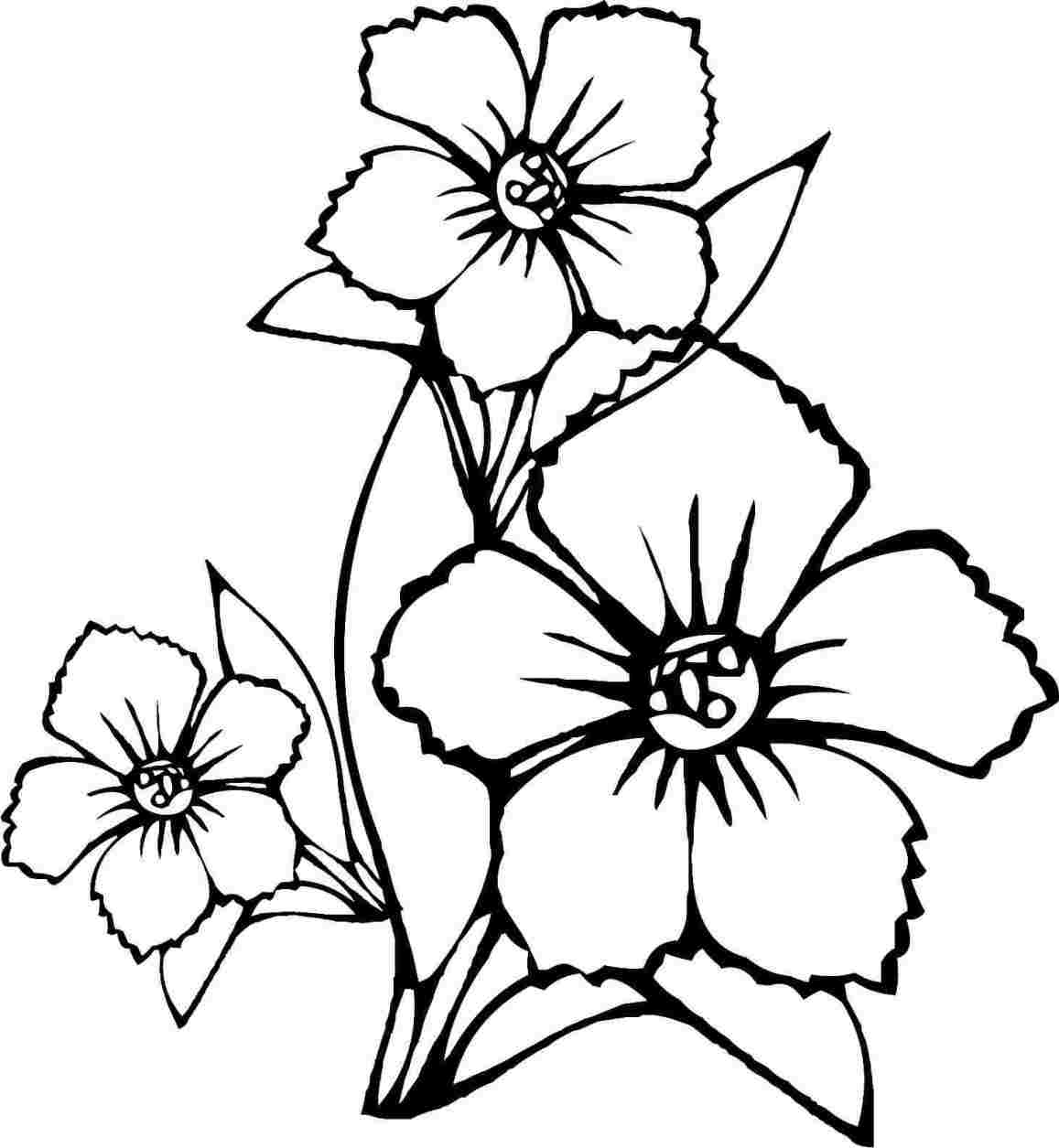 1157x1255 Simple Flower Drawing Colour