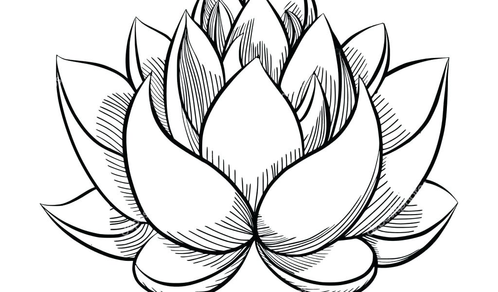 1024x600 Flower Simple Drawing