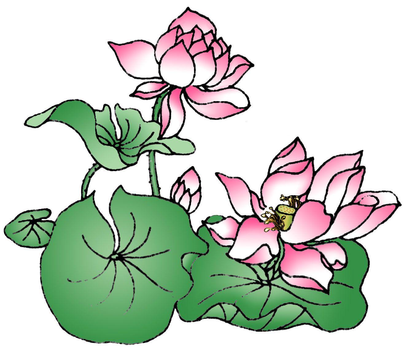 1316x1132 Lotus Drawing Color