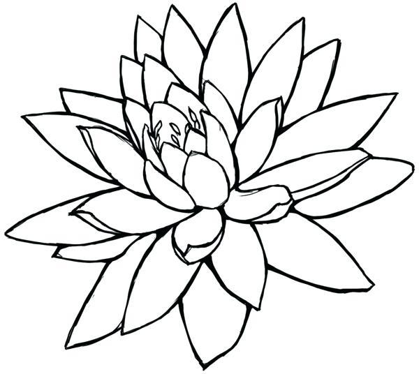 600x536 Lotus Flower Pencil Drawing