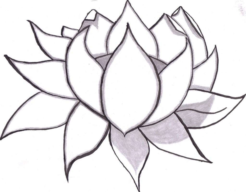 1024x803 Lotus Flower Simple Drawings