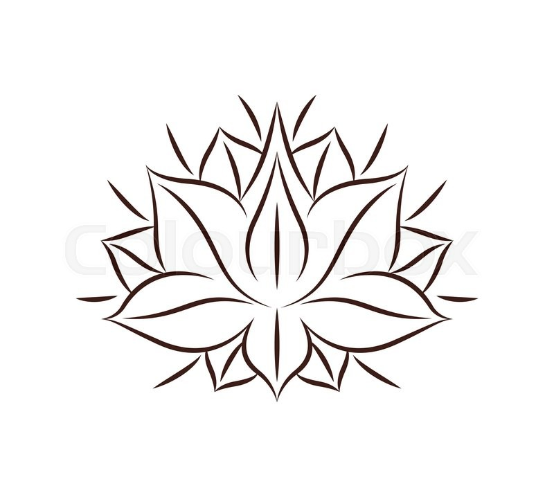 800x718 Lotus Flower Drawing Isolated Icon Stock Vector Colourbox